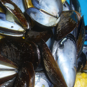 shells-in.jpg